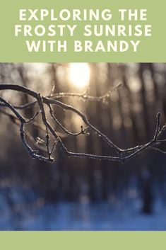 Exploring the Frosty Sunrise With Brandy - So I Was Thinking Snow Sound, School Sets, Walk In The Woods, Light And Shadow, Creative Writing, Photo S, Storytelling, Exploring, Sunrise