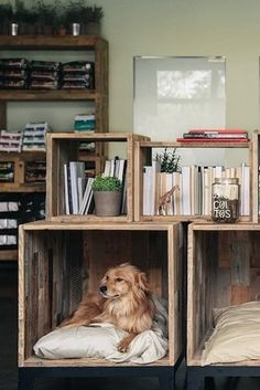 love this arrangement of rustic boxes / crates with one as a dog den!