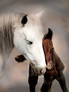 A beautiful white mare and a little brown foal.