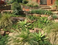 indigenous gardens south africa - Google Search