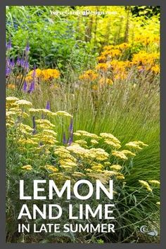 By late summer do your garden borders look lacklustre or spectacular? Here we tour the fabulous borders of Wollerton Old Hall and show you how to create late summer garden borders at home. Meadow Garden, Love Garden, Summer Garden, Forest Garden, Citrus Garden, Cheap Plants, Gardening Zones, Gardening Hacks, Gardening Magazines