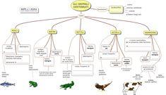 MAPPE per la SCUOLA: ANIMALI VERTEBRATI