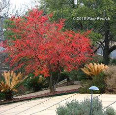 Plant This: Possumhaw holly adds fire to winter landscape - winter color - need male and female plant?