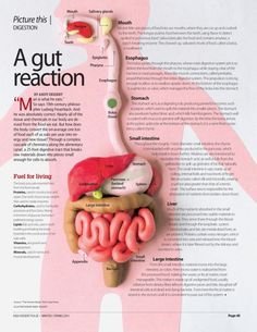 A Gut Reaction #Health #Nutrition