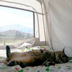 5 Things You Need to Go Camping With Cats
