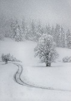Slovenia -- But I swear this is how my backyard looks right now.  LOL  020813