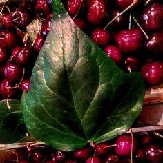 #ElisabettaPellini Elisabetta Pellini: Good morning! #Shopping at the #market. Two boxes of cherries,please!! I #love #cherries! #Nice and #good.. Amo le #cigliege ! Belle e buone!  La ciliegia ha proprietà #depurative e #disintossicanti, oltre che #diuretiche e #lassative!!! Nelle cigliege la presenza dei flavonoidi, in combinazione con le vitamine A e C stimola la produzione di collagene, apportando così innumerevoli benefici a