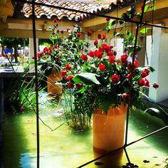 Aquest cap de setmana Fira de la Rosa #aRoses . #VisitRoses #capdecreus #inCostaBrava #catalunyaexperience #descobreixcatalunya
