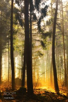 first morning sunlight in the forest - )