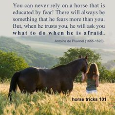 Horse tips 101 My Horse, Horse Girl, All The Pretty Horses, Beautiful Horses, Horse Riding Quotes, Horse Love Quotes, Horse Sayings, Cowboy Quotes, Cowgirl Quote