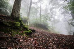 Enchanted Forest by Simon Regini on 500px