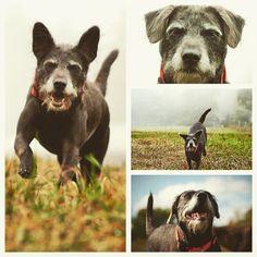 Smiles & curiosity from Luna Lewis! #evasplaypupsPA #dogs #dogcamp #prettygirl #playtime #dogsinnature #runfree #runlikethewind #smilingdogs #happytails #itsadogslife #autumntime #brooklyndogs #badassbk #adoptdontshop #rescuedog #doggyvacays #doggievacays #dogboarding #pleasantmount #northeasternpa #PA #pennsylvania