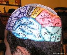 10 best 3d brain images science projects, school, science classroomimage result for brain model project ideas