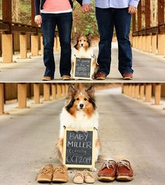 pregnancy announcement with dogs - Google Search