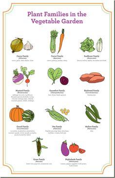 Crop Rotation Vital in Vegetable Garden