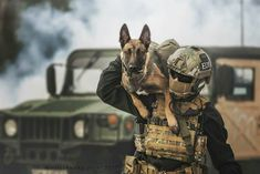 A Guide to Dog Training Military Working Dogs, Military Dogs, Military Gear, Police Dogs, Dog Soldiers, Belgian Malinois Dog, Military Drawings, War Dogs, Service Dogs