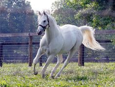 The big daddy, Tapit.  Sire of Frosted, the sparring partner of American Pharoah.  Frosted finished second to Pharoah in his Belmont and battled with him in the Travers, where Keen Ice passed them.