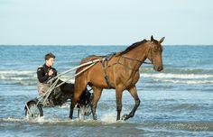 de soie, d'au et de lumière - un matin au bord de l'eau, Plage de Deauville, Normandie - FR