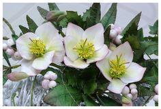 Helleborus, snowberries, ivy & holly