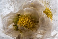 """""""The actual taking of the picture becomes secondary…it's all about the frozen flower."""" 