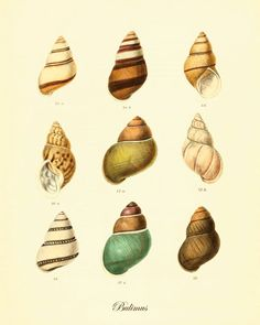 Antique Sea shell art print Beach decor art by VictorianWallArt, $10.00