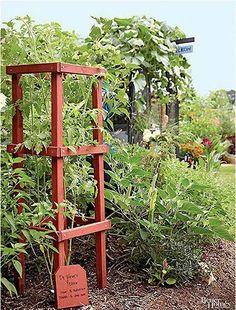 Enkelt stabilt torn för tomater