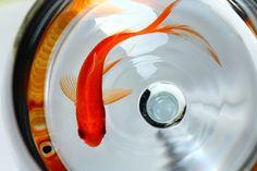 El emprendedor puede encontrarse con muchos peces de colores que más tarde se descubrirán como pirañas.