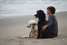 Watching the waves with my Standard Poodles.