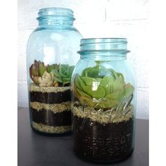 Not a true terrarium, but super cute way to use empty jars and bottles