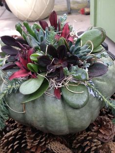 Succulent landscaping fall 28 New ideas Succulent Centerpieces, Pumpkin Centerpieces, Succulent Arrangements, Pumkin Decoration, Succulents In Containers, Cacti And Succulents, Planting Succulents, Succulent Landscaping, Succulent Gardening