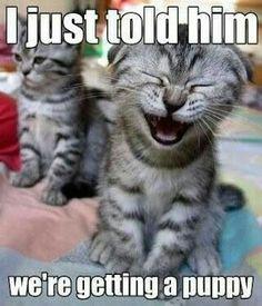 #funnydog