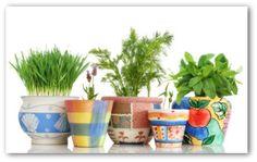 Indoor Vegetable Gardening, Indoor Gardening Tips, Indoor Container Gardening Ideas