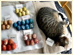 How to Naturally Dye Easter Eggs with the Help of Your Garden     http://diyhomesweethome.com/how-to-naturally-dye-easter-eggs-with-the-help-of-your-garden/