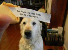¡La galleta acertó! #Perros #Frasesperros