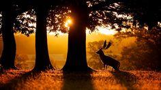 30 essential wildlife photography tips | TechRadar                                                                                                                                                                                 More