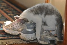 It's the reason why i know my cat loves me. #PhotographerCaptPiper, #Seriously, #SweatySneakers