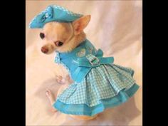 Puppy Love Dog Harness Dress 3 Piece Set - Dress, Hat and Leash Chihuahua Clothes, Cute Chihuahua, Puppy Clothes, Chihuahua Names, Dog Love, Puppy Love, Dog Clothes Patterns, Pet Costumes, Dog Dresses