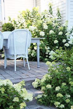 Limelight hydrangeas + brick patio + wicker chairs + farmhouse table = ♥