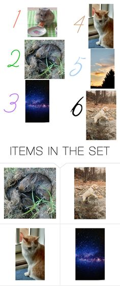 """I took all the pictures but not 3"" by hamsterlover225 ❤ liked on Polyvore featuring art"