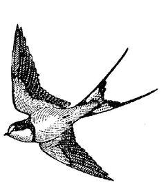 Swallow vintage style bird rubber stamp WM di dragonflybuzz, $6.00