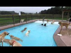 If You're Having A Bad Day Check Out These Photos From A Puppy Daycare Pool Party - Dose - Your Daily Dose of Amazing