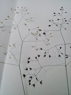 drawing grasses. Hannah nunn