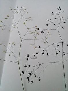 drawing grasses. Hannah nunn