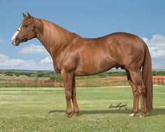 Stallionesearch.com - The First Stop in Stallion Research for Breeders of Racing Quarter Horses