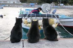 Waiting for a nice fish dinner!