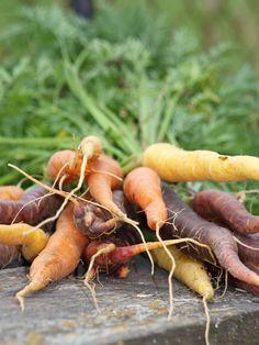 #bylinkove panstvi #zamek #zahrada #radost #bylinky  #bylinky #park #mrkev Den, Carrots, Vegetables, Park, Food, Carrot, Veggies, Vegetable Recipes, Parks