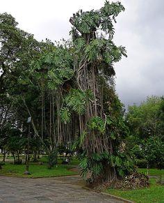 Trees in Parque Nacional San Jose