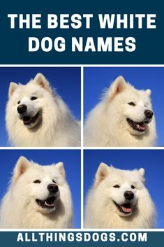 If you're on the lookout for the best white dog names, your search will end here. We've put together a list of the  coolest, grooviest, cutest and most popular names for white dogs. Check it out now!  #bestwhitedognames #whitedognames #bestdognames Cute Names, Unique Names, White Puppies, White Dogs, Best Dog Names, Most Popular Names, New Puppy, Polar Bear, Good Things