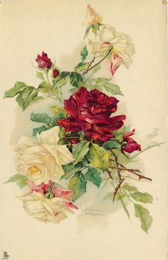 red rose & many buds, yellow/white roses and buds some flecked with pink