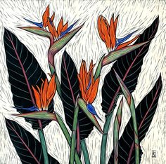 Linocuts by artist Rachel Newling of exotic flowers: Tropical Ginger, Frangipan. Rare Flowers, Exotic Flowers, Exotic Birds, Colorful Birds, Botanical Art, Botanical Illustration, Linocut Prints, Art Prints, Birds Of Paradise Flower